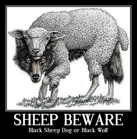 Black Sheep Dog Priest