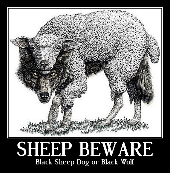 Black Sheep Dog or BLACK WOLF? | Blogger Priest